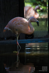 Flamingo and friend