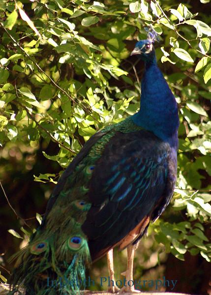 0056 Austin bird 5X7
