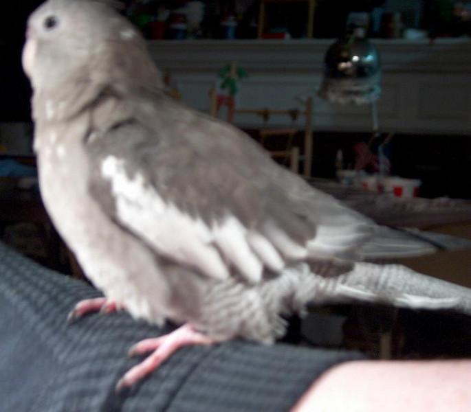 20040209-TweetieBird37