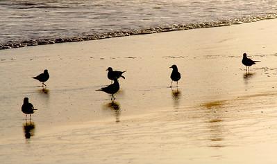 4016 Shorebirds