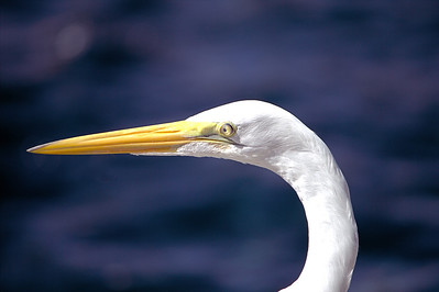 Long Billed Bird