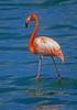 Flamingo Bonnaire Nederland Antilles