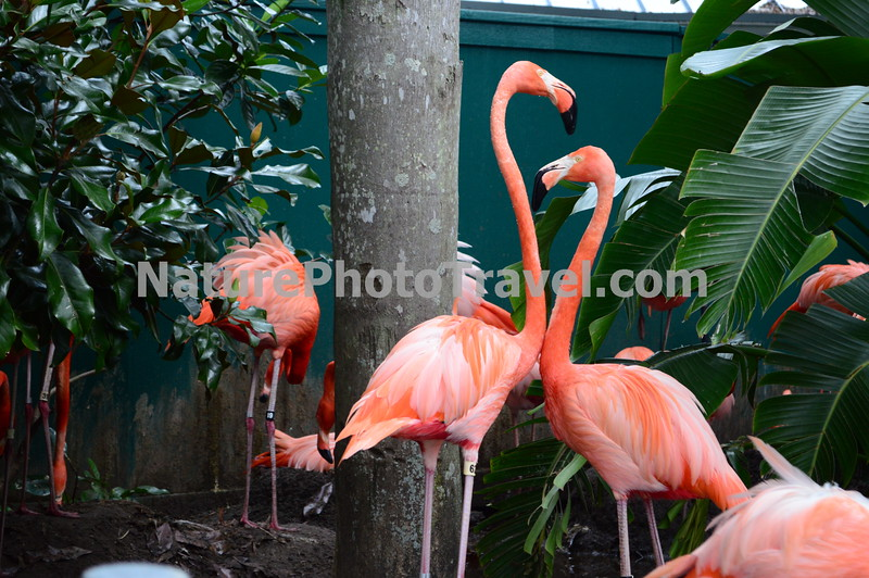 Flamingos (heart-like shaped necks)