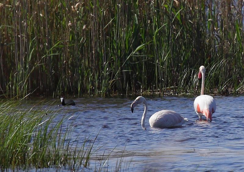 Flamingos, Western Cape, South Africa