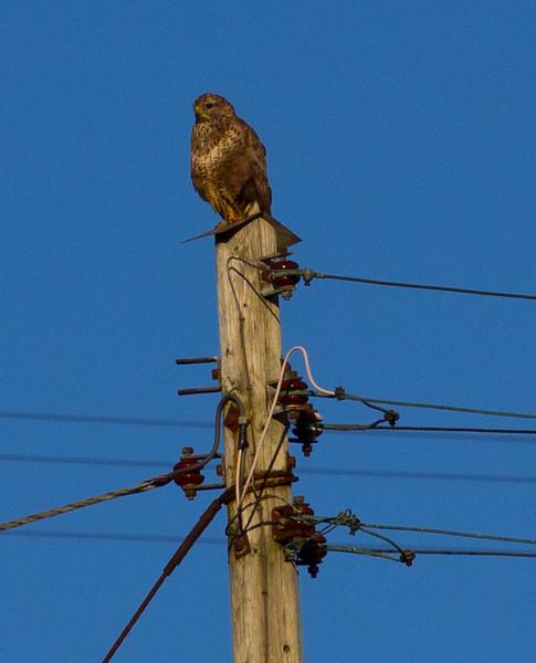 IMAGE: http://buttonmasher.smugmug.com/Animals/Birds/i-CrKdscm/0/L/IMG7888-edit-L.jpg