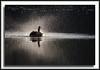 Canada Goose having a bath at Burnaby Lake.