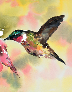 Broadtailed Hummer