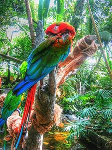 Galveston bird - Photography - W Davis