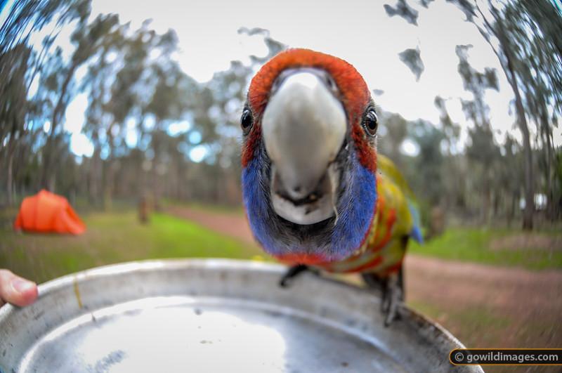Bird's eye lens