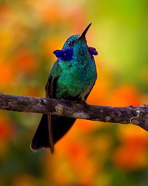 El Dorado Reserve, Colombia