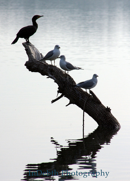 1186 Whiterock birds 5X7