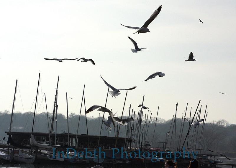 1195 Whiterock birds-boats 5X7