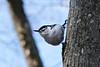 Ipswich River Wildlife Preserve, Topsfield, MA.