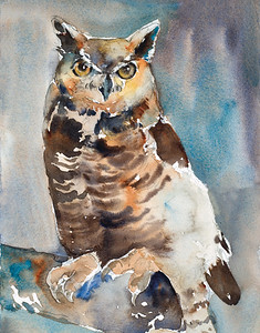 Frosty the Great Horned Owl