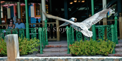 Birds-5171