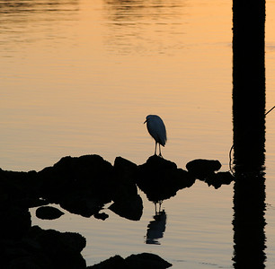 4433 Bird Silhouette Sunrise