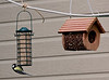 Bird Feeder farm in France - Great Tit on fat feeder