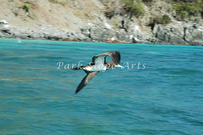 Birds-5232