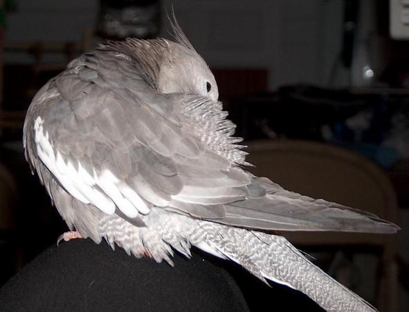 20040209-TweetieBird19