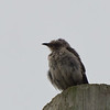 At nearly two hundred years old, Oracle bird has much to teach...