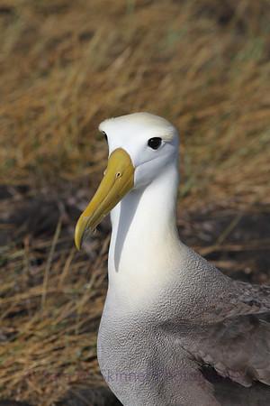 Galapagos (66)