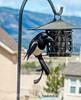 Magpie on the Suet Feeder