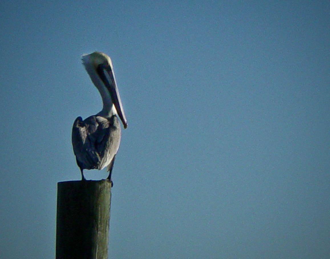 Birds-01434