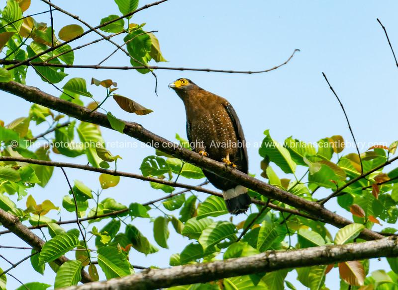 Serpent eagle on branch against blue sky.
