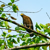 Serpent eagle on branch against blue sky.