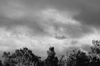 1939 Birds Clouds