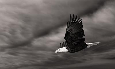 bald eagle against sky AI deNoise edit #2 L  April 13 2015-
