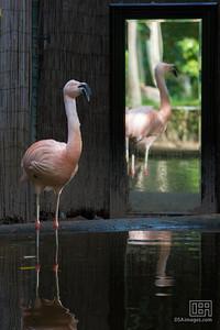Flamingo and friend