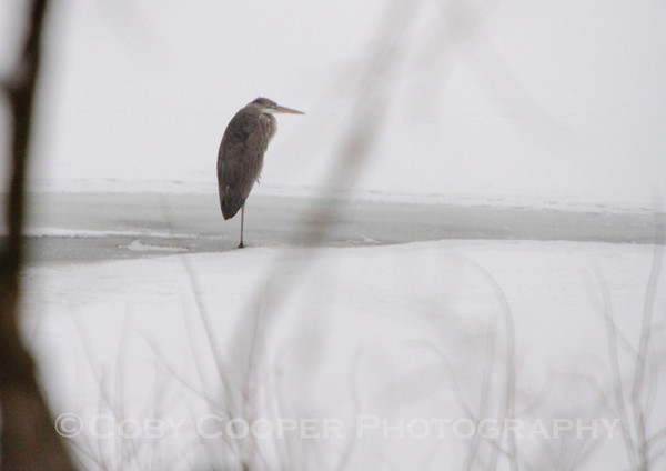 Winter along the Illinois River...this guy almost looked like he was hunkered down waiting on a bus.