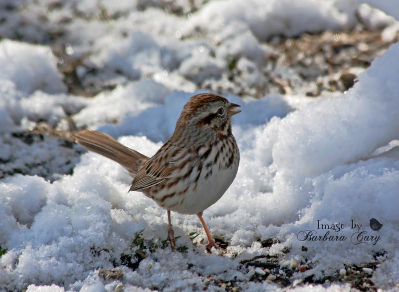 sparrow_IMG_2002