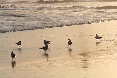 4016 Birds on Sand