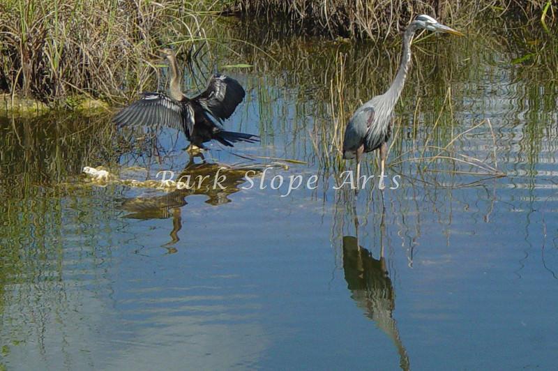 Birds-01422