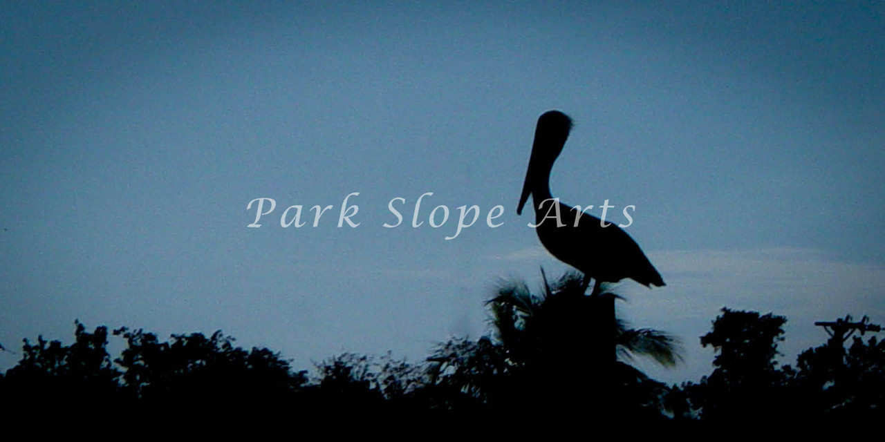 Birds-01431