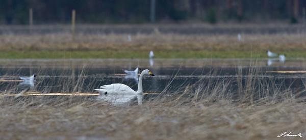 Rauhallinen aamu pääsiäisenä 2011...