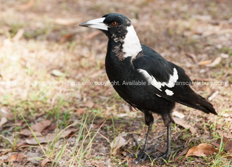 Australian wildlife-7