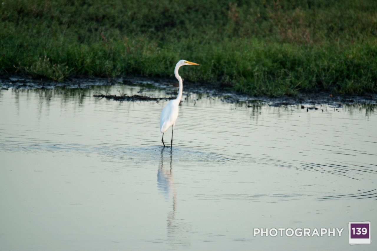 Jay Carlson Wildlife Area
