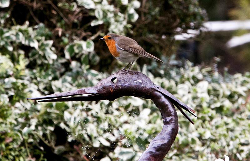 Robin - March2012