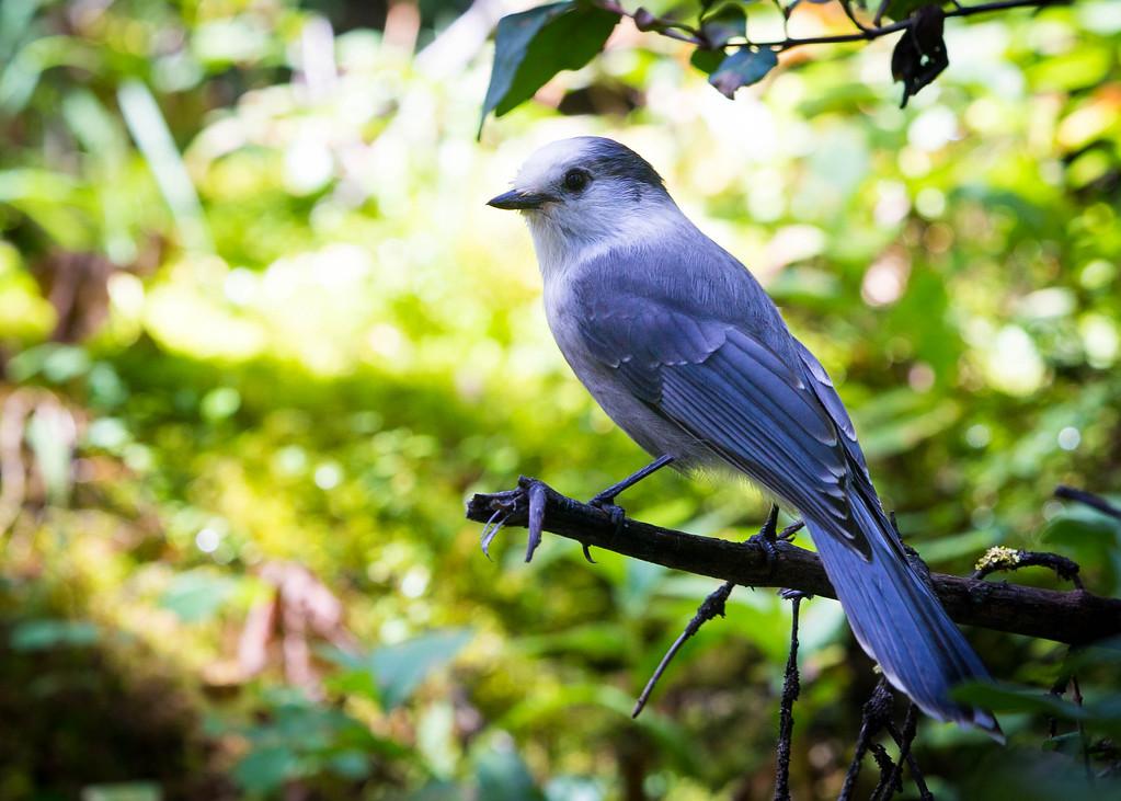 bird-1588