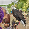 Bald Eagle at 2017 Las Cruces Renaissance ArtsFaire