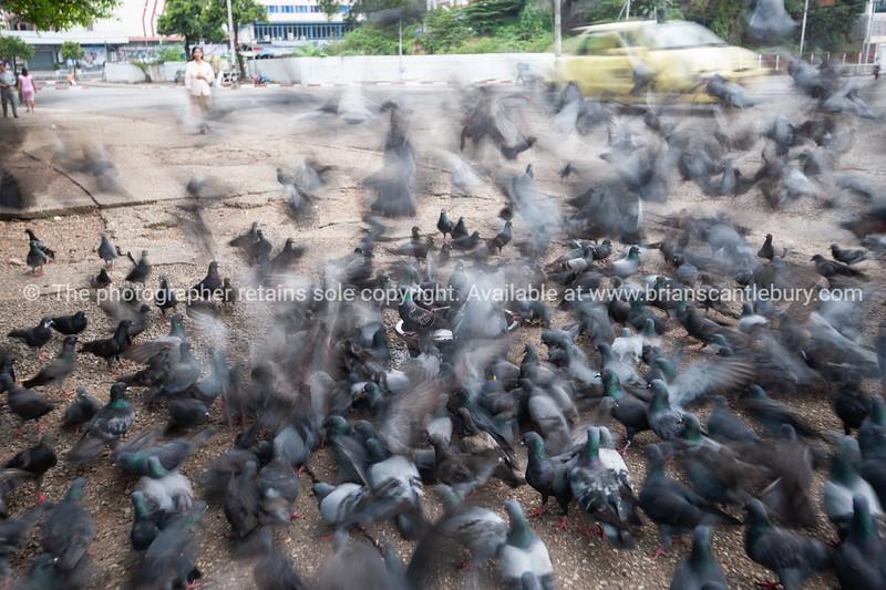 Pigeons flock onto city pavement