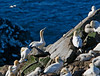 The nesting site is packed and territorial disputes errupt constantly.