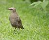 This was taken at Parc des Rapides in Lachine, Quebec on the island of Montreal. A sanctuary for migratory birds. Ceci a ete prise au Parc des Rapides a Lachine dans un sanctuaire pour oiseaux.