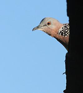 6989 Peeking Bird