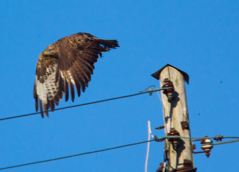 IMAGE: http://buttonmasher.smugmug.com/Animals/Birds/i-WW8zzdM/0/L/IMG7951-edit-L.jpg