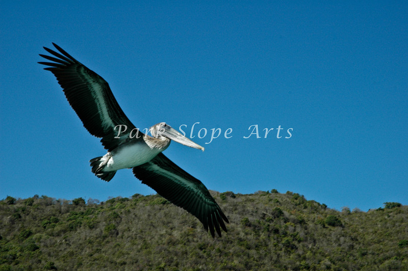 Birds-5215