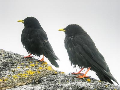 Two birds - Photo by W Davis